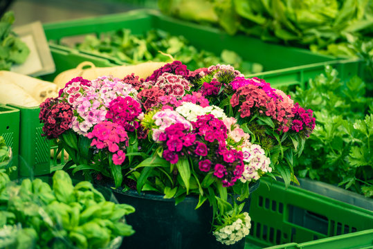 Beautiful carnation flowers at an european market