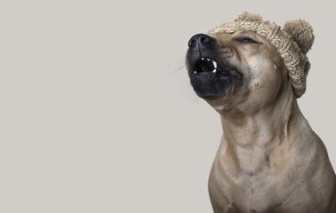 schattige pratende hond met gebreide muts, copy space