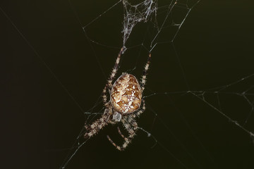 a large spider on a web in the forest in summer