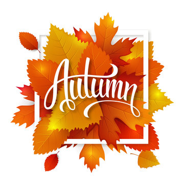 Autumn leaves lettering label. Vector hand drawn typography on a fall leaves background