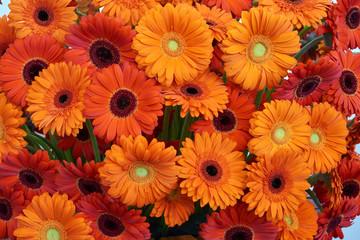 Gerbera flower arrangement