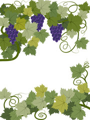 Blue grapes with leaves