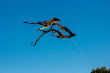 Black kites in the sky