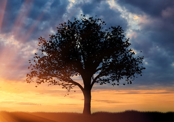Silhouette of a lone tree