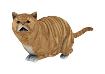 3D Rendering Red Tabby Cat on White