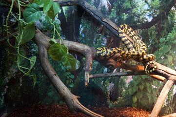Животный мир, змея