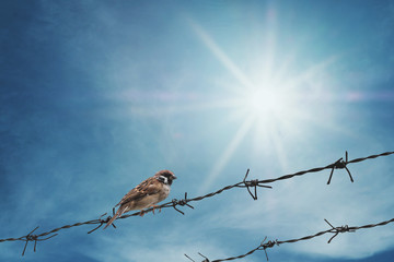 Little sparrow bird on barbed wire on blue sky with sunshine rays, selective focus