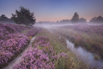 Path through blooming heather at dawn