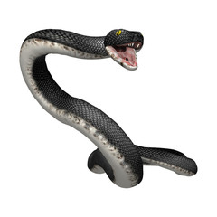 3D Rendering Southern Black Racer on White