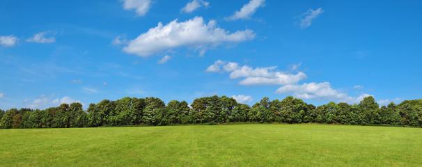 Landschaft mit Wiese, Büschen, Bäumen und leichter Bewölkung am Himmel