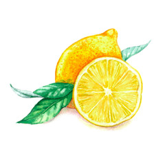 Hand drawn watercolor illustration of isolated yellow lemon and leaves on the white background