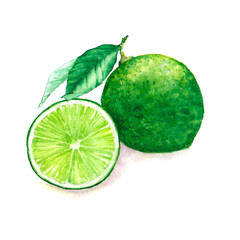 Hand drawn watercolor illustration of isolated green lime fruits on the white background