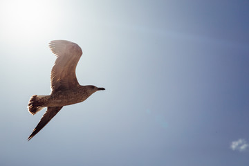 Perfect gull flies in the rays of sparkling sun
