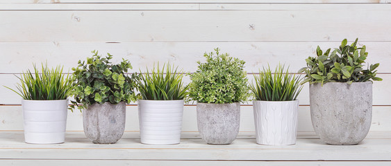 Pot plants in white pots and concrete on a background of white b