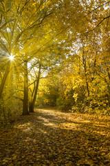 ein wunderschöner Wald im Herbst mit viel goldgelben Laub