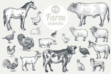 Farm animals. Goat, cow, horse, sheep, pig, bull, sheep, donkey, dog, cat, bird goose, quail, duck, couple turkeys, rooster, hen, guinea hen. Isolated on white background. Vintage vector set . Wall mural
