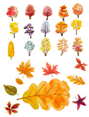watercolor set of autumn trees and leaves. hand painted illustration