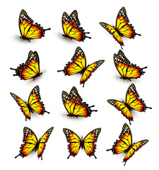 Collection of yellow butterflies, flying in different directions