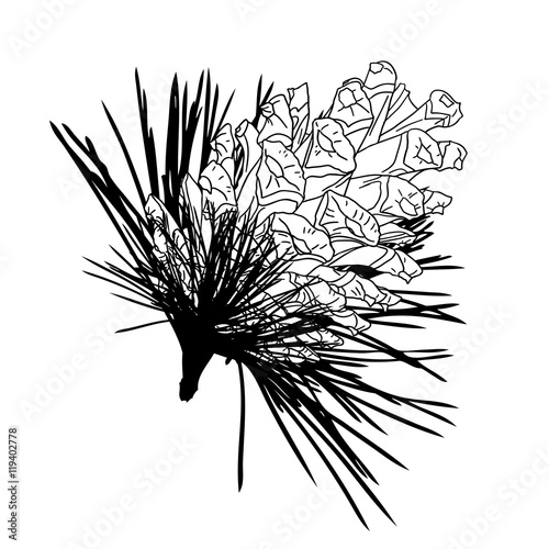how to draw an open pine cone