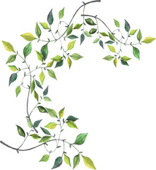 Green branches drawn by watercolor on white background. Hand drawn vector illustration.