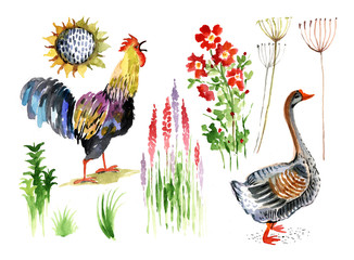 rooster, goose, flowers, watercolor