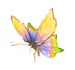 Isolated watercolor colorful butterfly on white background. Beautiful fragile creature for decoration.