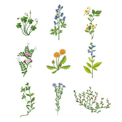 Wild Flowers Hand Drawn Collection Of Detailed Illustrations