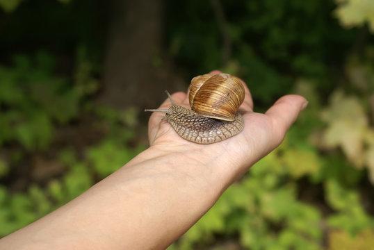 Snail-grape on a hand