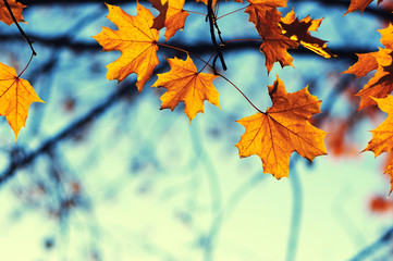 autumn leaves on sky