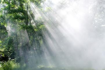light through the trees in fog ,Rays Of Light , sun beam