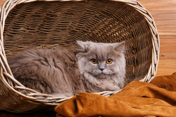gray cat with yellow eyes  on a wooden basket