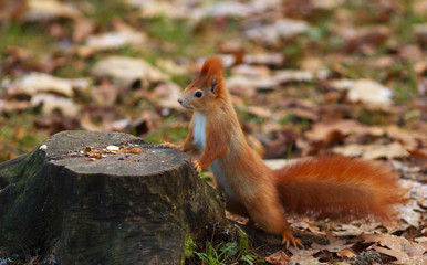 Squirrel Proping on the Stump