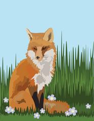 Fox in the field of grass Vector illustration