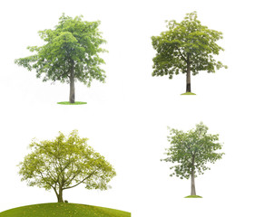 Green tree leaves isolated