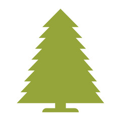 pine tree nature