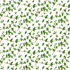 Realistic natural seamless pattern with evergreen herb. Thyme branch and leaves on white background