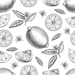 Seamless Vector hand drawn lime or lemon. Whole , sliced pieces half, leave sketch. Fruit engraved style illustration. Retro  . Detailed citrus drawing. Great for water, detox drink, natural cosmetics