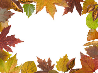 Autumn leaves frame in white background
