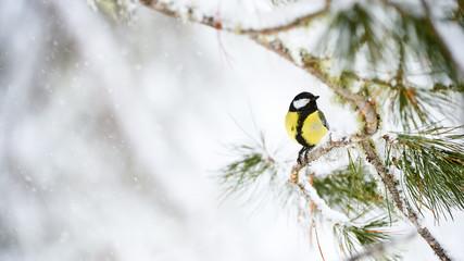 Fototapeta premium Bogatka w zimie
