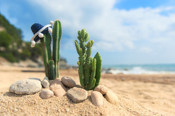 Cactus plants with sombrero at the beach