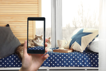 Female hand making photos of cute cat on a smartphone