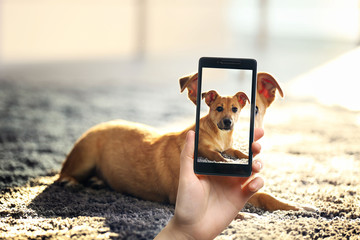 Female hand making photos of cute dog on a smartphone