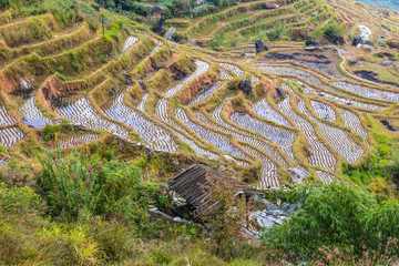 Chinese rice fields in cloudy weather