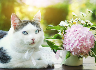 blue eyed cat with hydrangea pink bouquet