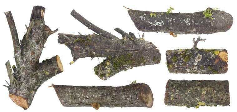 Mossy stubs