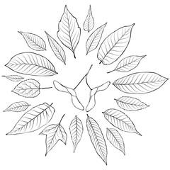 Leaves silhouette set vector