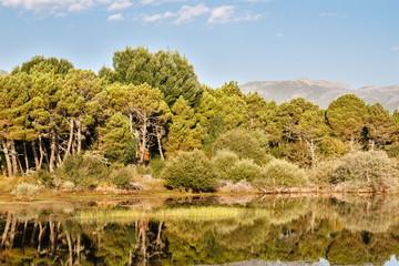 Pinar de Pino Negral, Pinus pinaster y aguas del Embalse de Tabuyo del Monte, León.