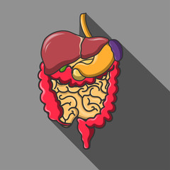 Vector human organs icon set illustration. EPS