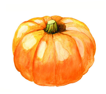 hand painted watercolor pumpkin isolated on white