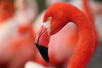 Detail van flamingo